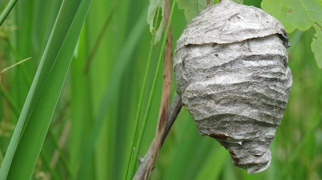 cuib-de-viespi-impermeabil